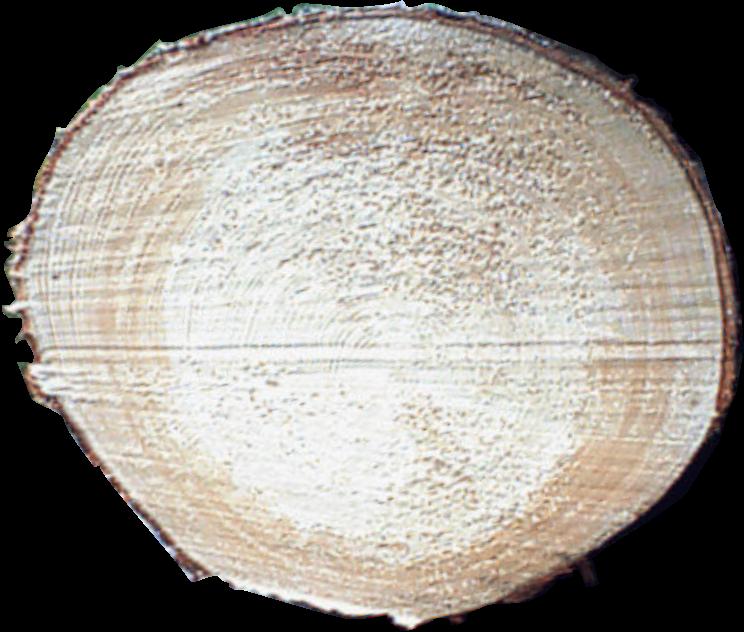 konstruktionsvollholz online kaufen 80x100